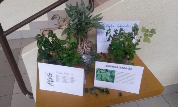 Výstava liečivých rastlín